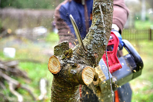 tree and stump removing service